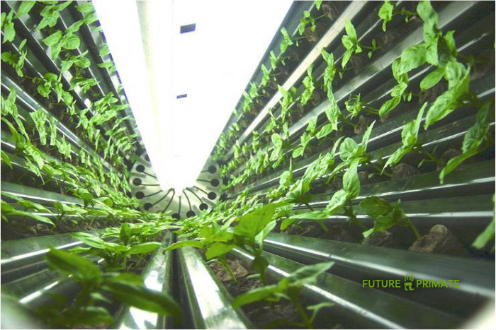 The world's biggest vertical farm is set to soon open in Scranton, Pennsylvania