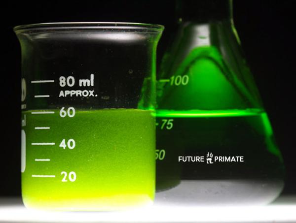 biofuelbreakthrough_futureprimate