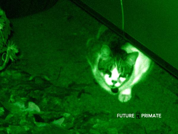 nightvisiondrops_futureprimate
