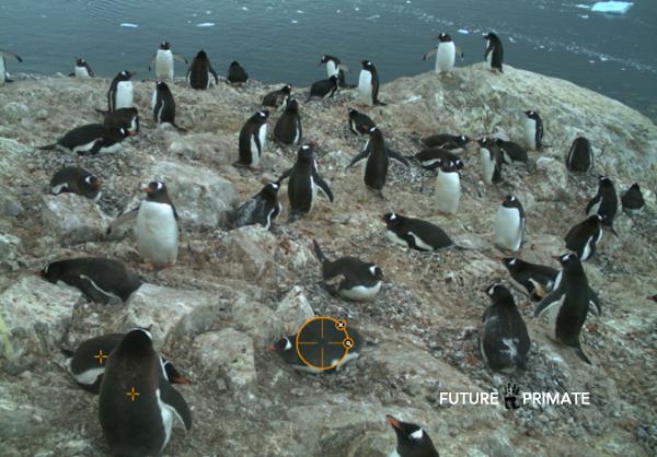 penguinszooniverse_futureprimate
